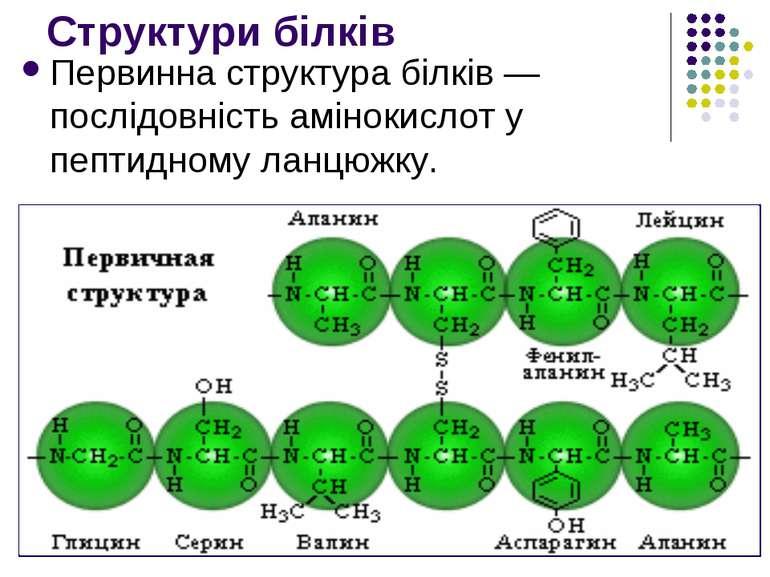 Структури білків Первинна структура білків— послідовність амінокислот у пепт...