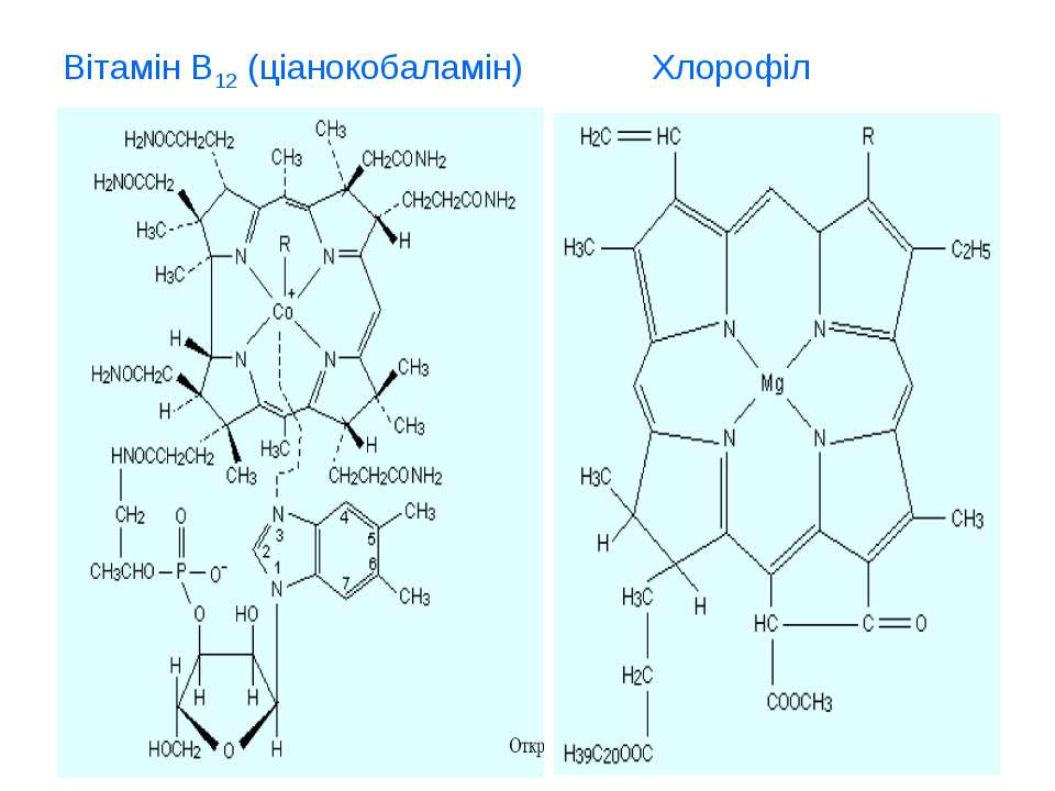 Вітамін В12 (ціанокобаламін) Хлорофіл
