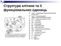 Структура клітини та її функціональних одиниць ГлЕР – гладенький ендоплазмати...