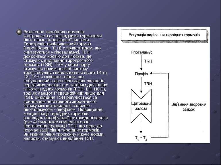 Виділення тироїдних гормонів контролюється пептидними гормонами гіпоталамо-гі...