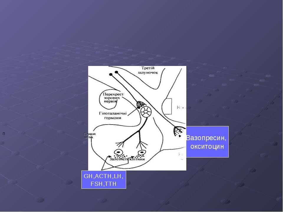 П GH,ACTH,LH, FSH,TTH Вазопресин, окситоцин Передня частка