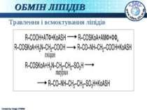 ОБМІН ЛІПІДІВ Травлення і всмоктування ліпідів Created by Sergiy STORM