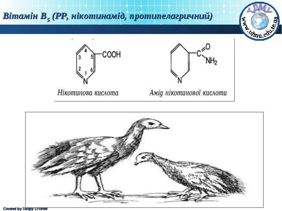 Вітамін В5 (РР, нікотинамід, протипелагричний) Created by Sergiy STORM