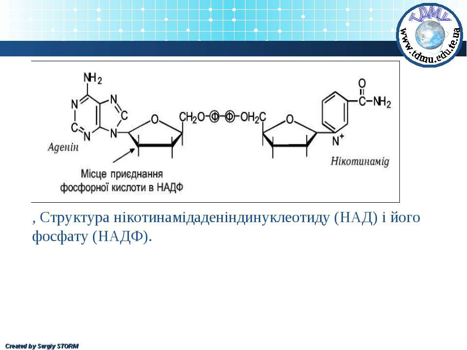 , Структура нікотинамідаденіндинуклеотиду (НАД) і його фосфату (НАДФ). Create...