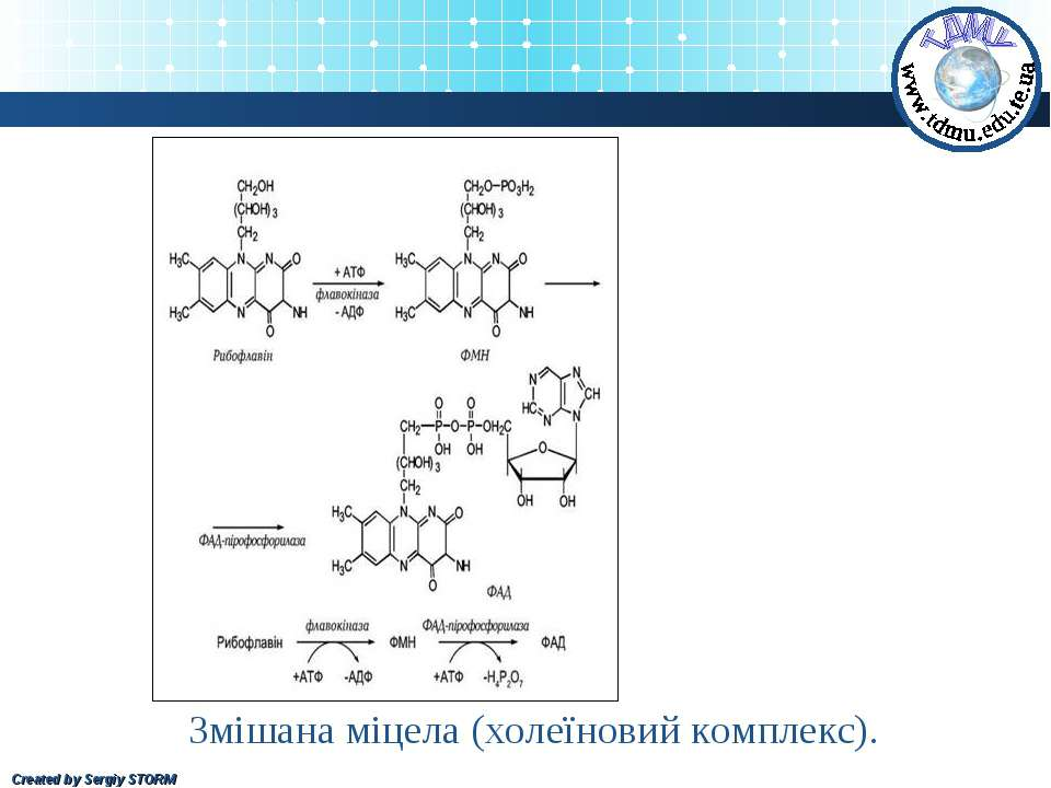 Змішана міцела (холеїновий комплекс). Created by Sergiy STORM