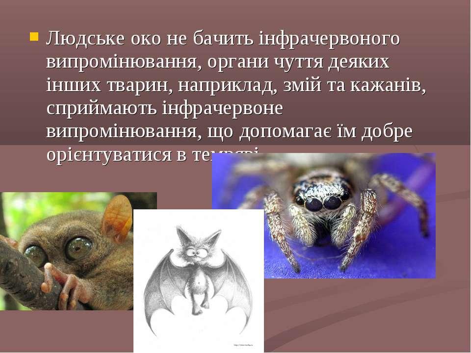 Людське око не бачить інфрачервоного випромінювання, органи чуття деяких інши...
