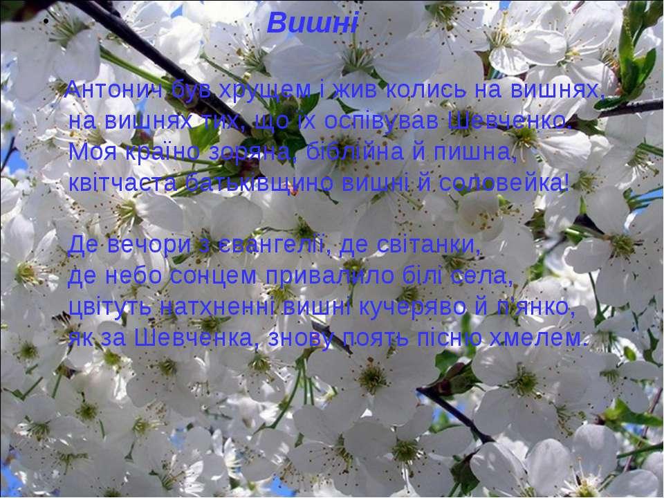 Вишні Антонич був хрущем і жив колись на вишнях, на вишнях тих, що їх оспіву...