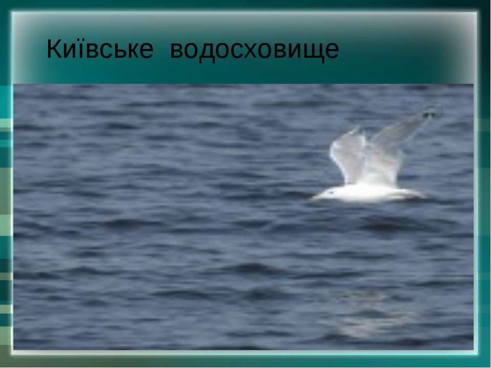 Київське водосховище