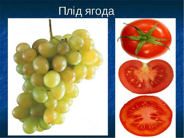 Плід ягода