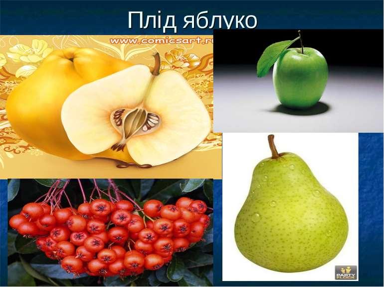 Плід яблуко