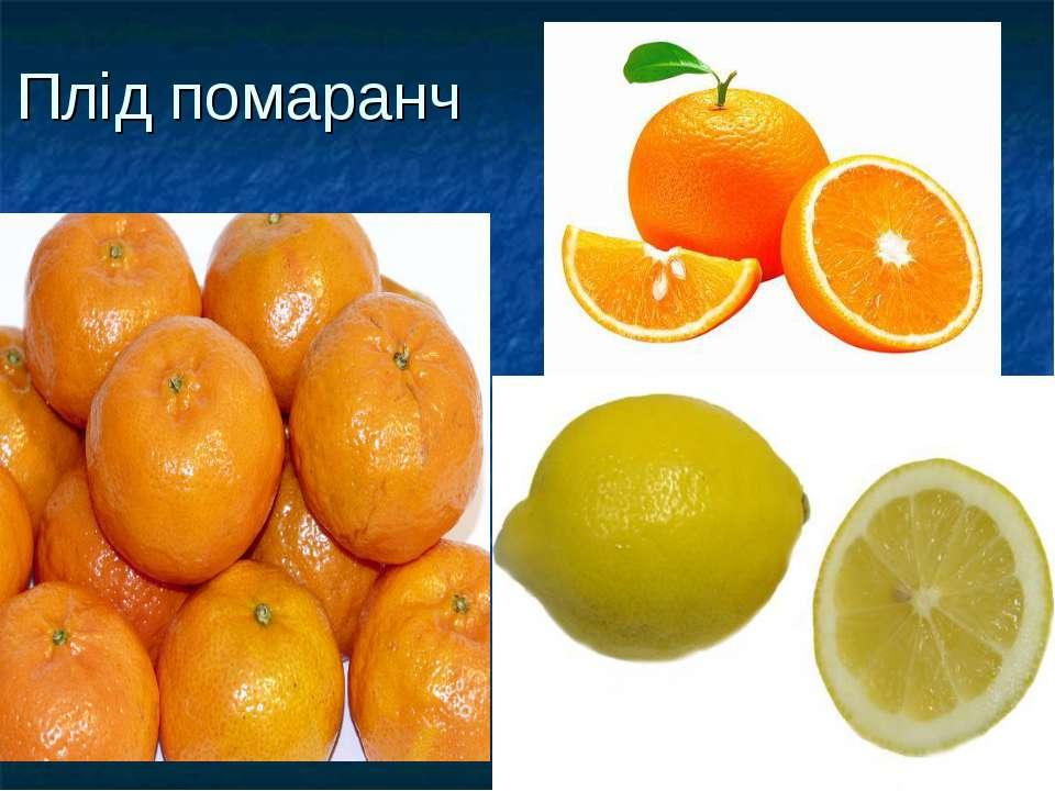 Плід помаранч