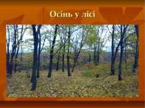 Осінь у лісі