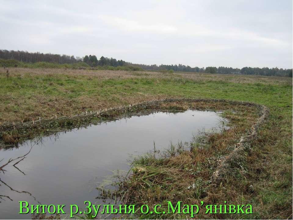 Виток р.Зульня о.с.Мар'янівка