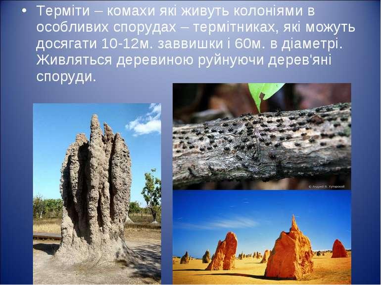Терміти – комахи які живуть колоніями в особливих спорудах – термітниках, які...