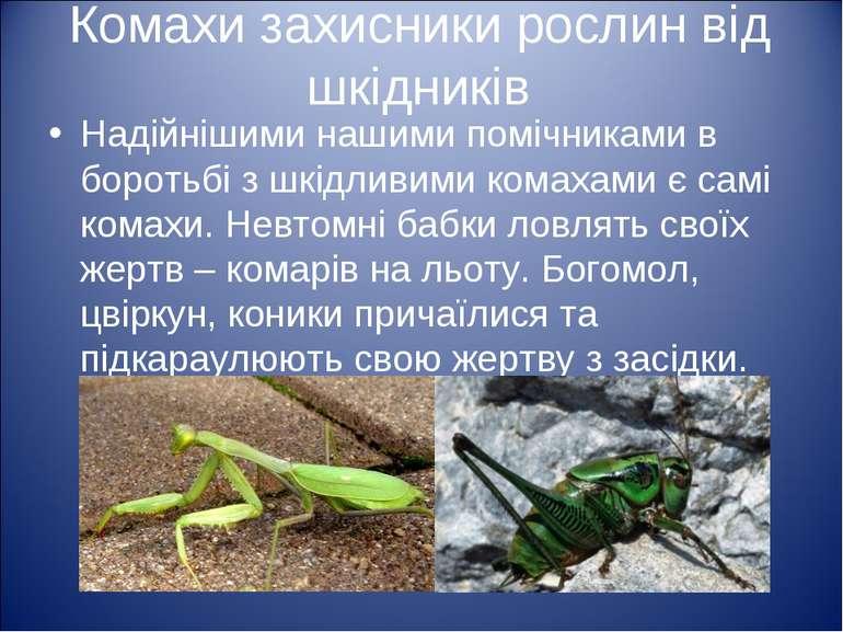 Комахи захисники рослин від шкідників Надійнішими нашими помічниками в бороть...