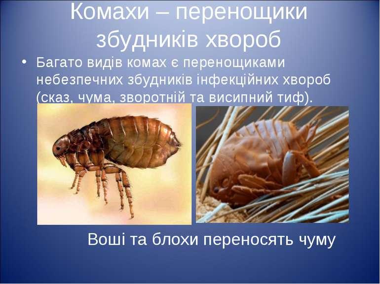 Комахи – перенощики збудників хвороб Багато видів комах є перенощиками небезп...