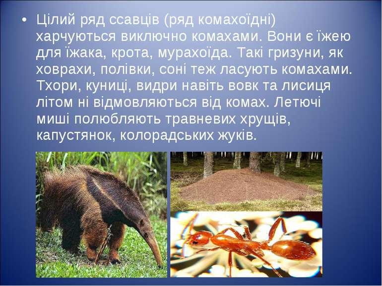 Цілий ряд ссавців (ряд комахоїдні) харчуються виключно комахами. Вони є їжею ...