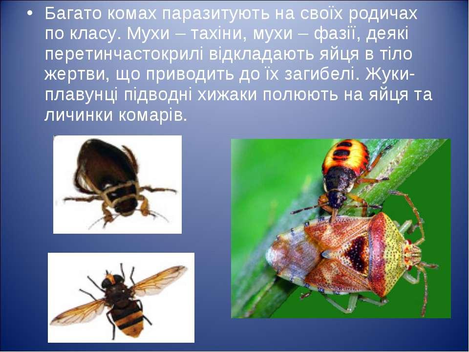 Багато комах паразитують на своїх родичах по класу. Мухи – тахіни, мухи – фаз...