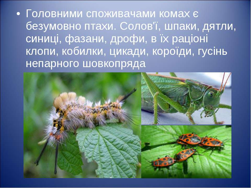 Головними споживачами комах є безумовно птахи. Солов'ї, шпаки, дятли, синиці,...