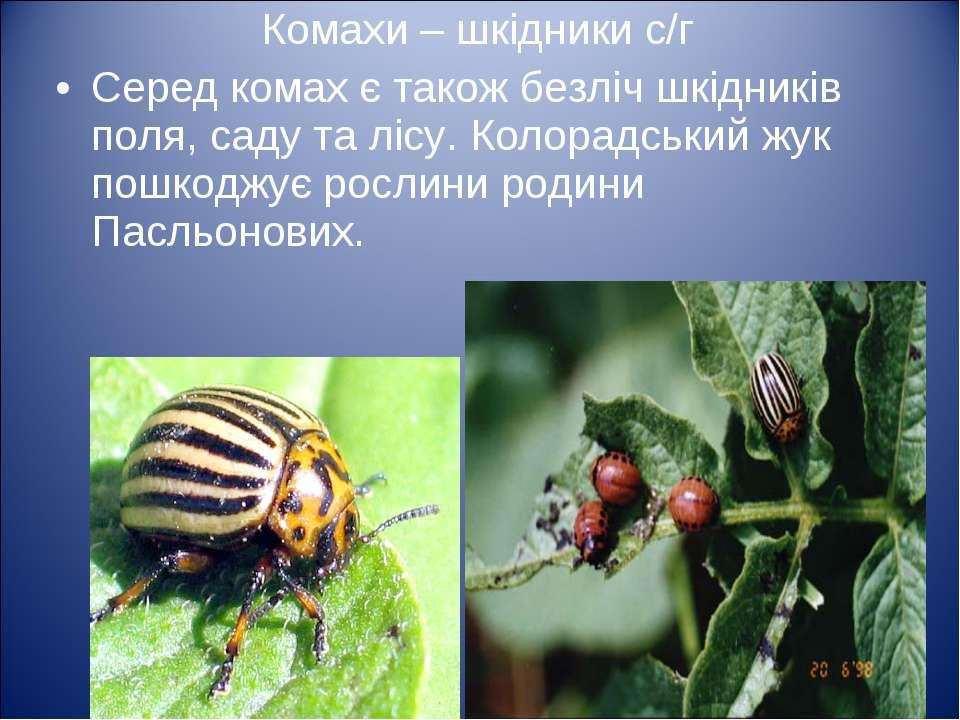 Комахи – шкідники с/г Серед комах є також безліч шкідників поля, саду та лісу...