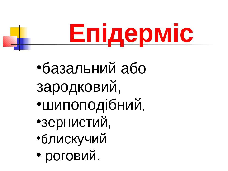 Епідерміс базальний або зародковий, шипоподібний, зернистий, блискучий роговий.