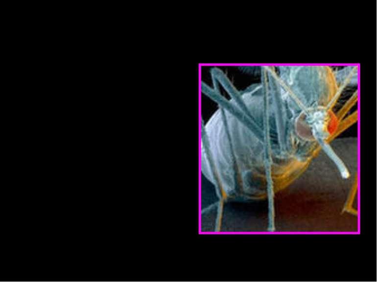 У епідеміології вектор— організм, що сам не викликає хворобу, але який розпо...