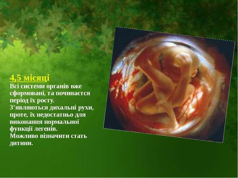 4,5 місяці Всі системи органів вже сформовані, та починаєтся період їх росту....