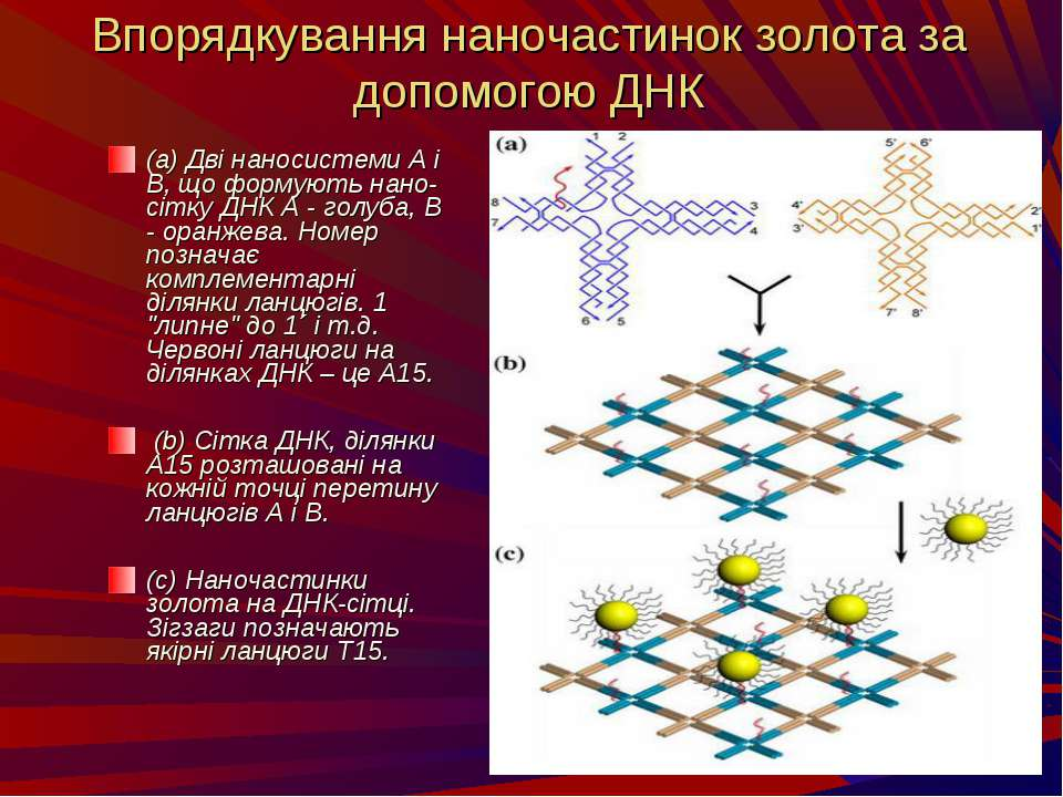 Впорядкування наночастинок золота за допомогою ДНК (a) Дві наносистеми А і В,...
