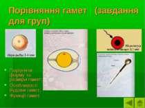 Порівняння гамет (завдання для груп) Порівняти форму та розміри гамет; Особли...