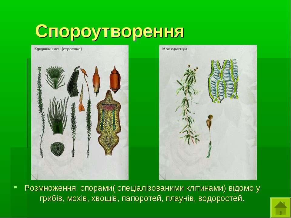 Спороутворення Розмноження спорами( спеціалізованими клітинами) відомо у гриб...