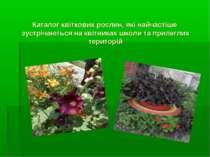 Каталог квіткових рослин, які найчастіше зустрічаються на квітниках школи та ...