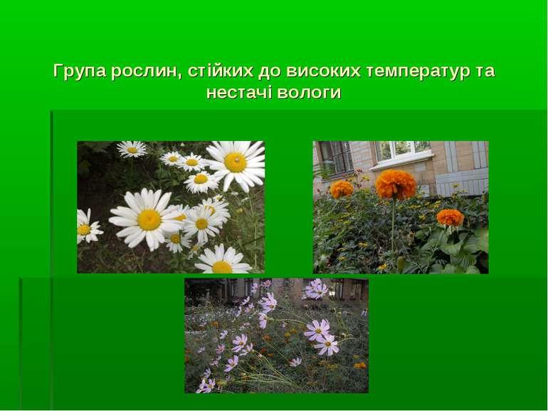 Група рослин, стійких до високих температур та нестачі вологи