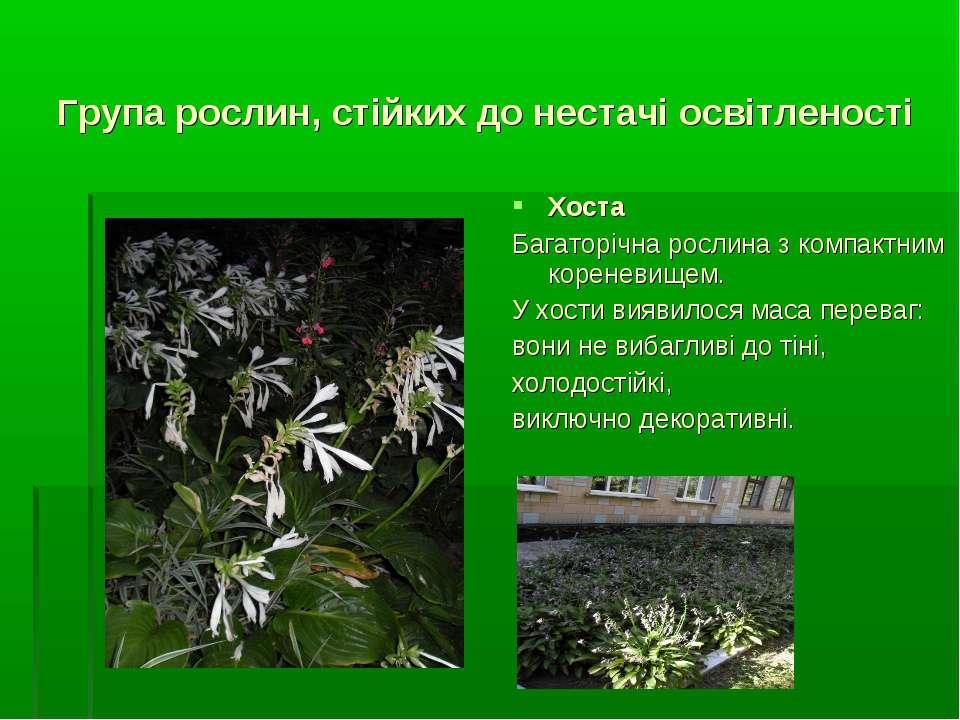 Група рослин, стійких до нестачі освітленості Хоста Багаторічна рослина з ком...