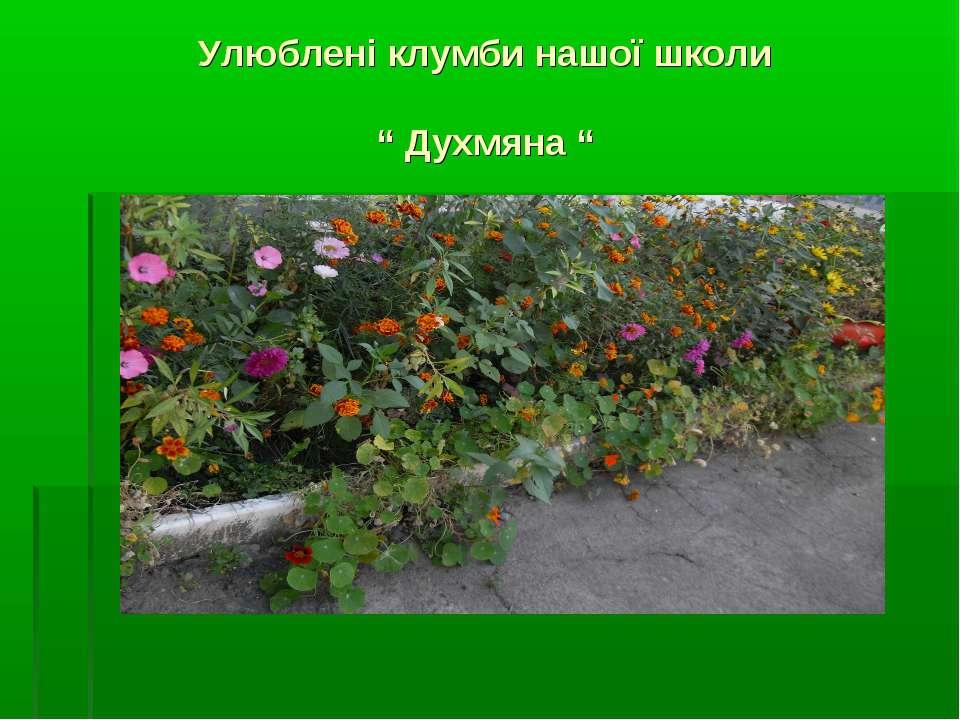 """Улюблені клумби нашої школи """" Духмяна """""""