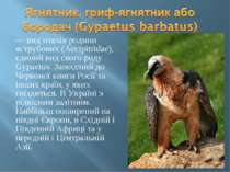 — вид птахів родини яструбових (Accipitridae), єдиний вид свого роду Gypaetus...
