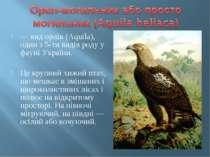 — вид орлів (Aquila), один з 5-ти видів роду у фауні України. Це крупний хижи...