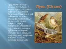 - рід хижих птахів родини Яструбові. У межах ареалу віддають перевагу відкрит...