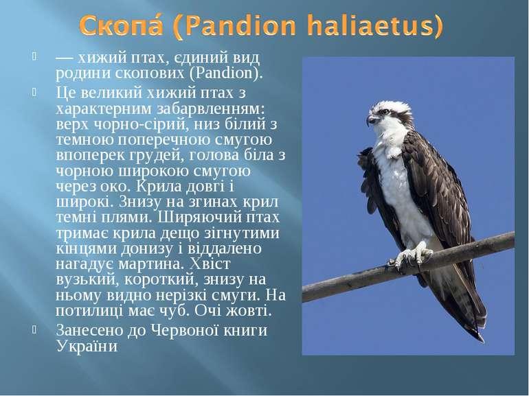 — хижий птах, єдиний вид родини скопових (Pandion). Це великий хижий птах з х...