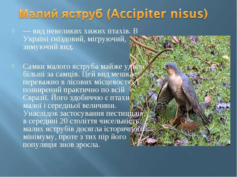 — вид невеликих хижих птахів. В Україні гніздовий, мігруючий, зимуючий вид. С...