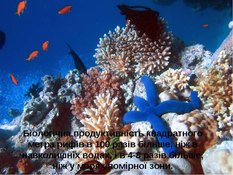Біологічна продуктивність квадратного метра рифів в 100 разів більше, ніж в н...