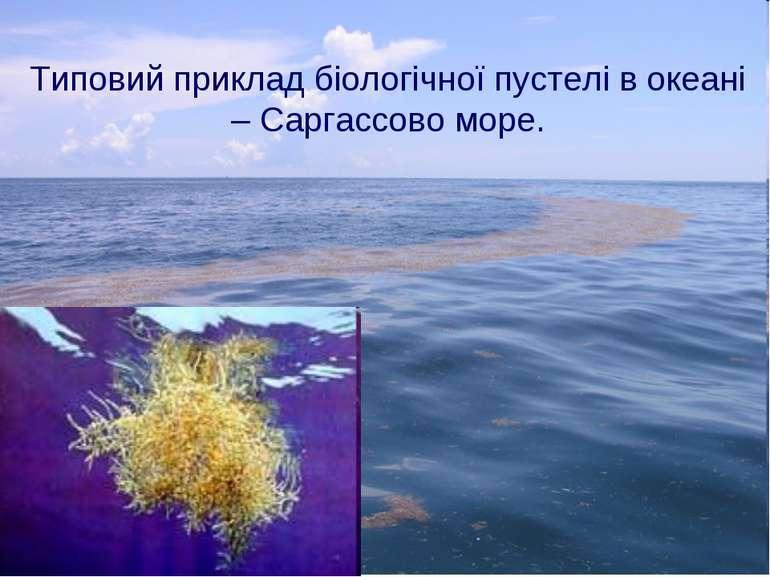 Типовий приклад біологічної пустелі в океані – Саргассово море.