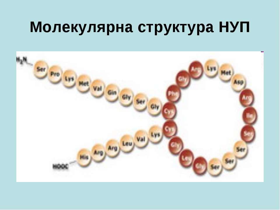 Молекулярна структура НУП