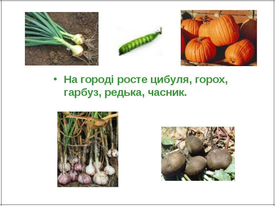 На городі росте цибуля, горох, гарбуз, редька, часник.