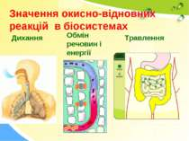 Значення окисно-відновних реакцій в біосистемах Дихання Обмін речовин і енерг...