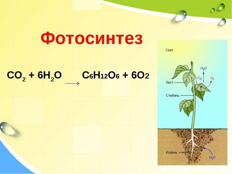 Фотосинтез CO2 + 6H2O C6H12O6 + 6O2