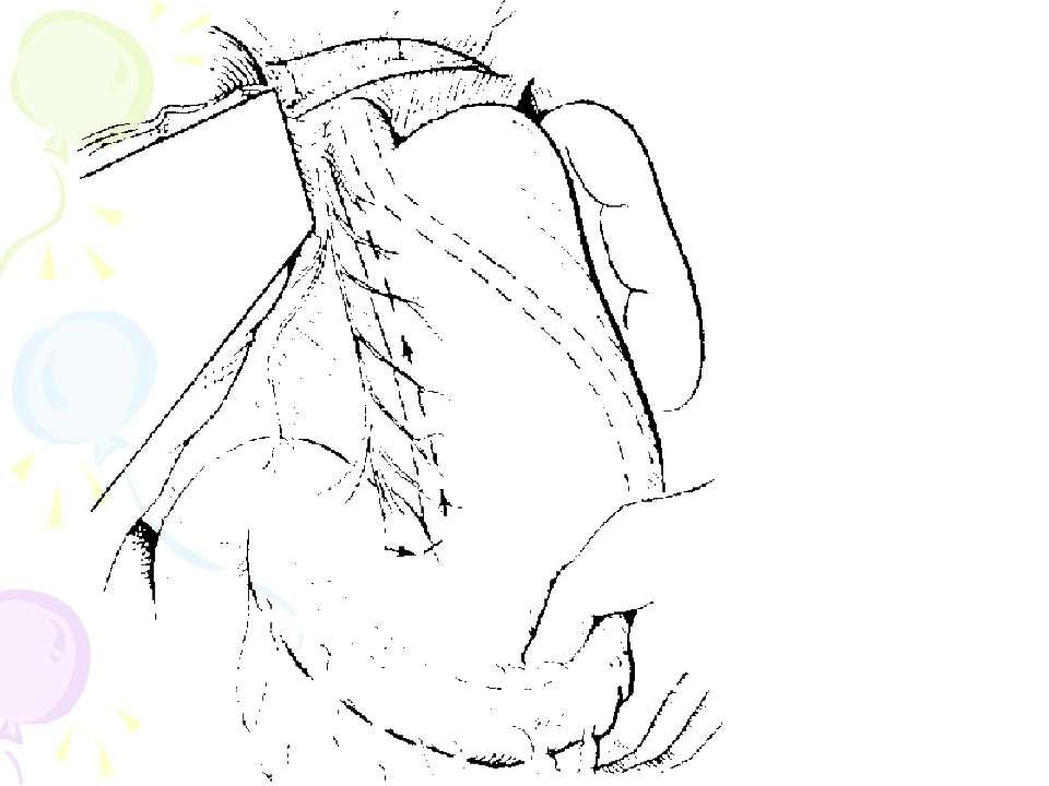 Селективна проксимальна ваготомія. Ідентифікація переднього нерва Латарже і м...