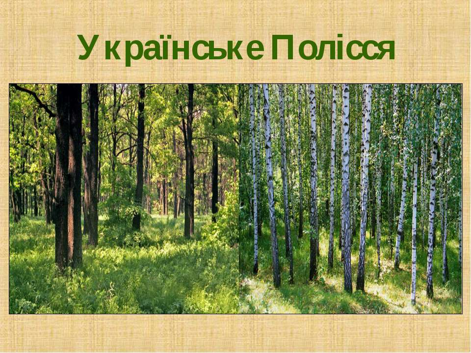 Українське Полісся