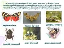На території парку відмічено 40 видів комах, занесених до Червоної книги Укра...