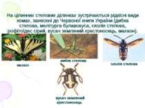 На цілинних степових ділянках зустрічаються рідкісні види комах, занесені до ...