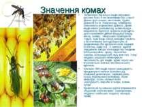 Значення комах Запилення багатьох видів квіткових рослин було б не можливим б...